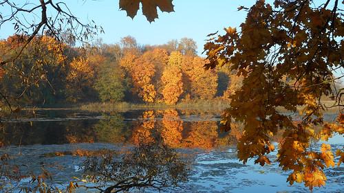 autumn red yellow foliage