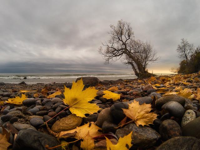 fall at the shore