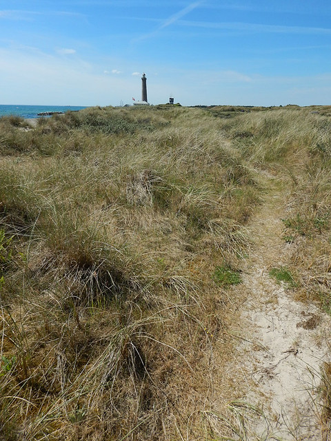 Sand path lined with grasses at Skagen's Grenen Beach in Denmark