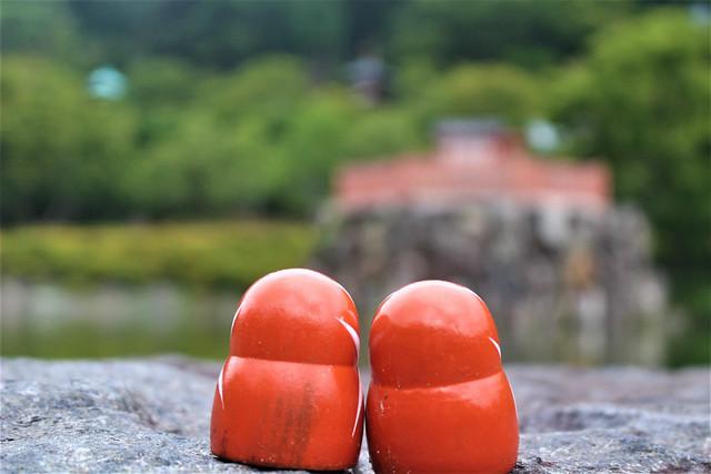 katsuo-ji-daruma004