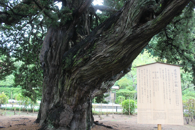 kenchoji015