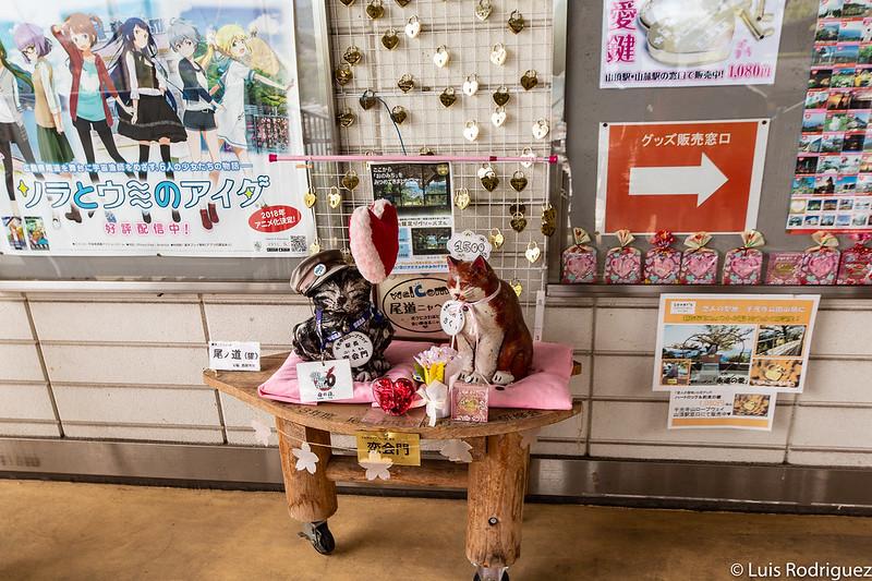 Gato jefe de estación Koiemon y gatita guía Sakura