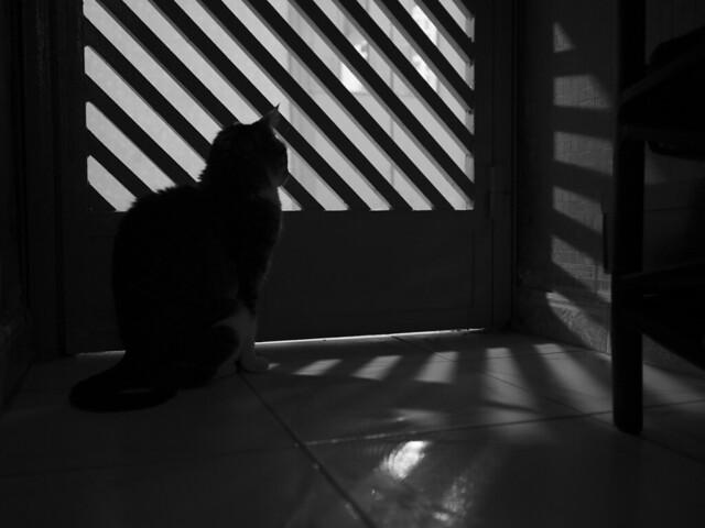 cat wants freedom