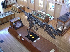 The Redpath Museum's  Albertosaurus skeleton