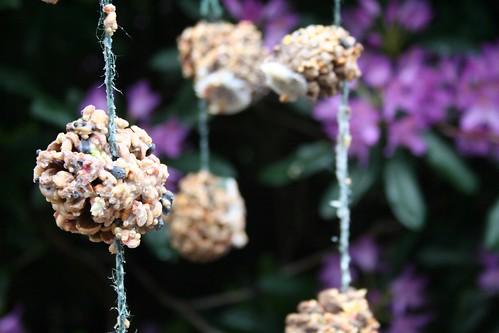 pine cone bird feeder | by Daniel Hughes
