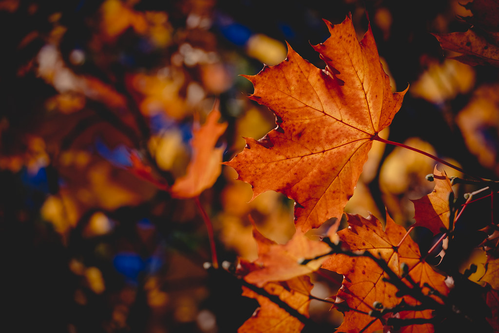 Herbststimmung - Autumn moods