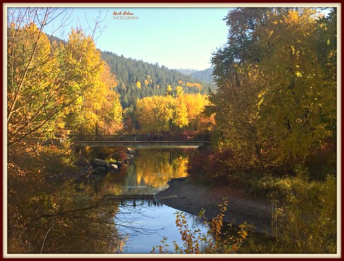 autumn fall fallcolors leaves trees reflection river wenatcheeriver livermore washington nature bridge water waterscene waterscape landscape picmonkey