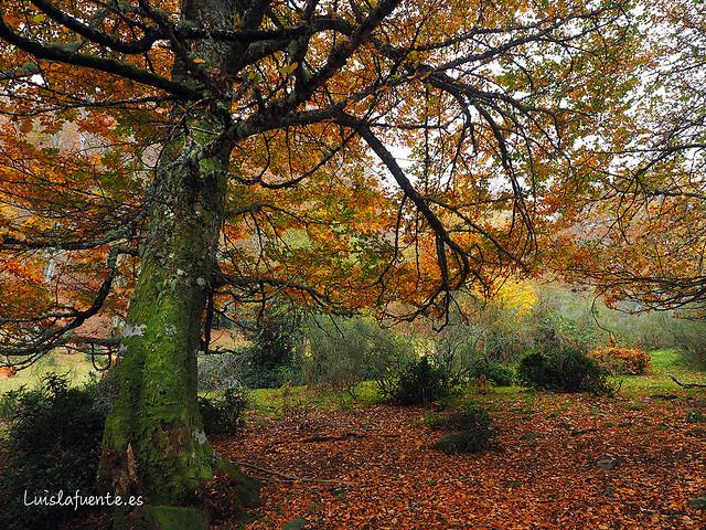 Parque Natural de Redes, Asturias, Reserva de la Biosfera