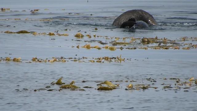 Two Sea Otters having fun