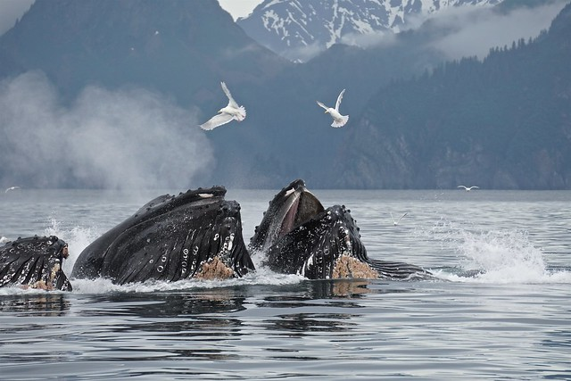 2 Birds and 3 Whales