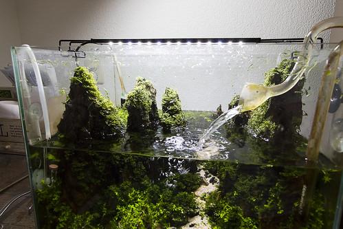 maintenance aquaflora vivarium beta tank 2 | by nigel_kh