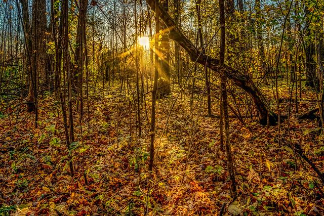 Sunrise in the Autumn woods