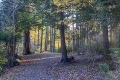 Hemlock Ravine Park