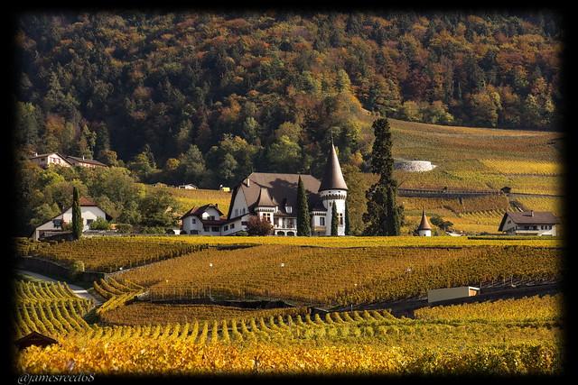 Domaine de la commune d'Yvorne - canton de Vaud - Suisse