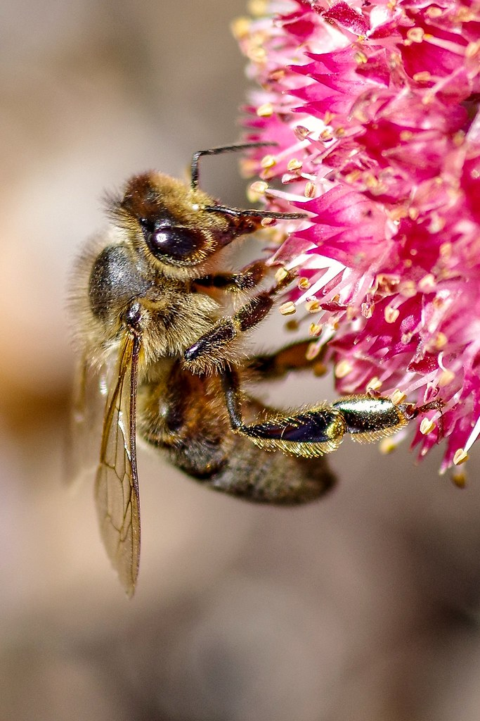 What kind of bees make milk? Boo Bees | Alan Taylor