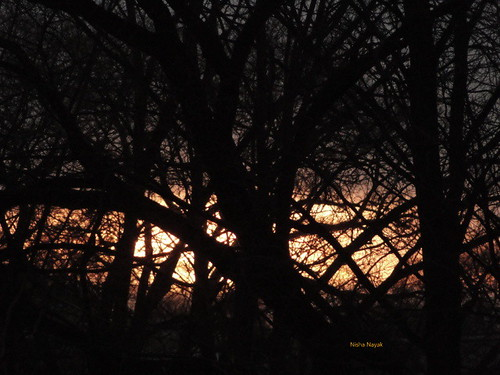 fire behind woods fiery sunset winter 2013 pockets nature street balcony branches twigs