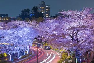 Midtown Sakura Lightup - Tokyo, Japan | by inefekt69