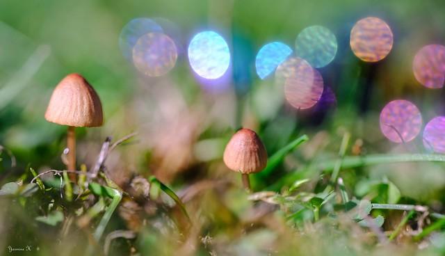 Les premiers champignons - 6029