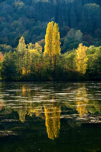 lake tree water reflection sunset echternach luxemburg
