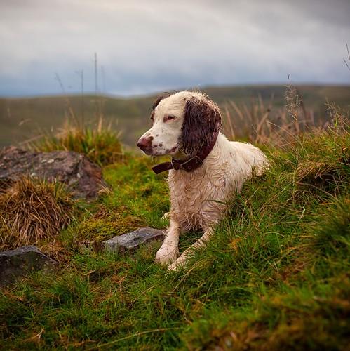 Rupert in Rural Rochdale | by Missy Jussy