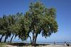 Montrose Beach by pantagrapher