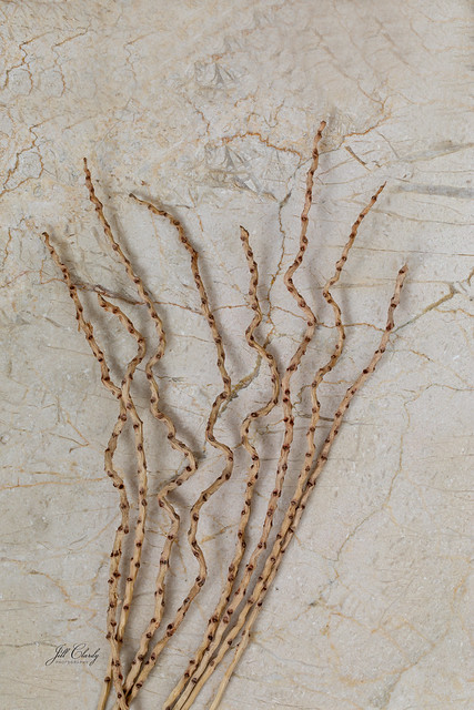 Found Objects: Curly Twigs