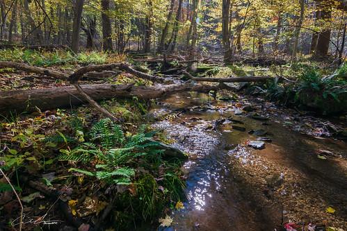 trees landscape brownsfarmtrail water maryland flowersplants fall catoctinmountainpark color sabillasville unitedstates us