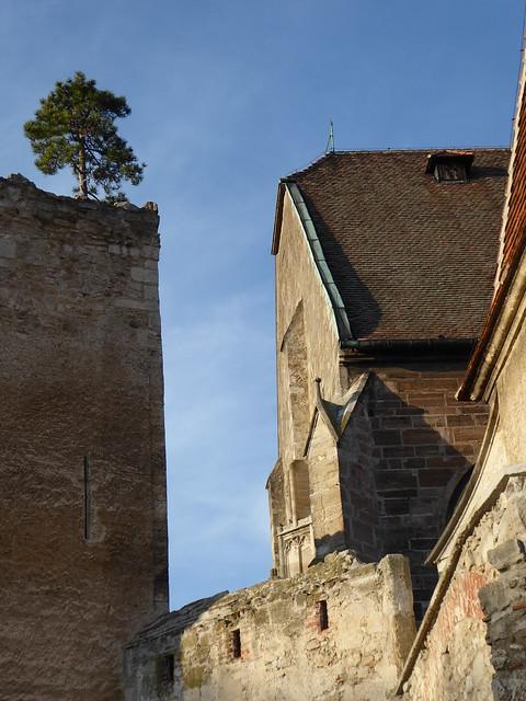 ein Baum auf der mittelalterlichen Mauer