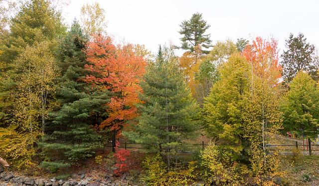 Automne, autumn - Parc des Sept-Chutes, P.Q., Canada - 7644