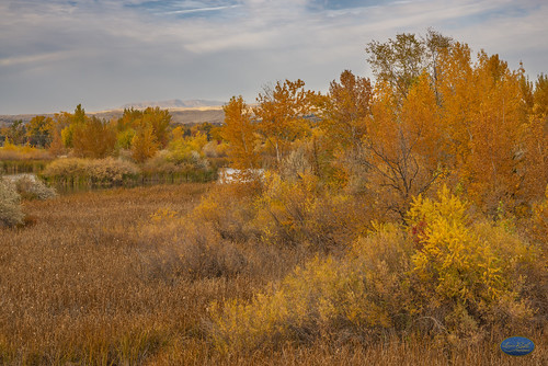 squawbutteidahoparkshyattlakeshiddenreserveboise emtte sky wood field tree grass landscape artofimages forest nikon d810 85mmf18 idaho boiseparksandrec autumn landoflandscapesmagazine flickrsocial flickrglobal myownprivateidaho boiseparks cityoftreesboise idahoparks beautifulcolors beautiful ponds mountains hills lighting peaceful idahophotographers nikond810official anythingboise landscapephotography boiseweekly beautifulcapture bestlighting capture serene photosforsale professionalimages bushes limb branch inspiration frameit masterpiece autumncolors october november inspiringcapturesandartgroup coloursofflickr wildliferefuge birdsbirdsonlybirds duckwildlifeanimalsducksgooglingsgoose paintinglike orangecolor flickrfallphotos leaf leaves bobross art artistic boisecityof parksinboise flickrpics fallphotosonflickr amazingcolors bookcoverart bookcover bookart perspective hyatthiddenlakesrefuge