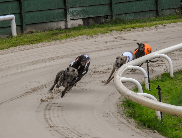 10214 Crayford Greyhounds