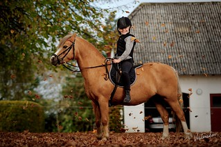 Proud Welsh section A Owner and Rider: Ellie