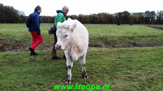 2018-11-07               Baarn SOP           25 Km  (60)