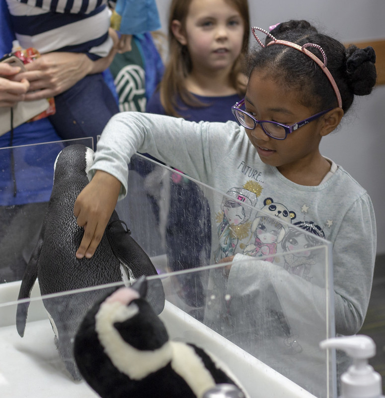 Petting a penguin for the first time