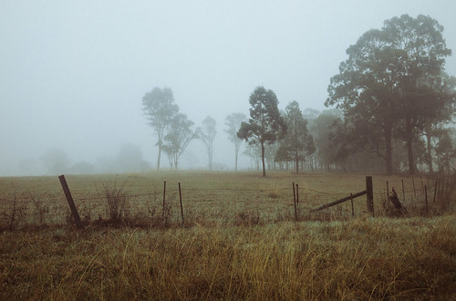 appleiphone7 australia fence fog grass landscape newsouthwales schofields sydney tree