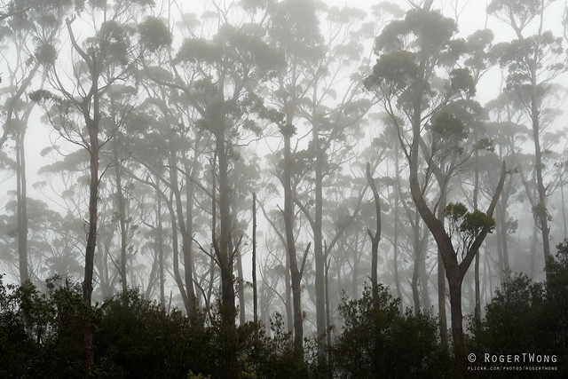 20181015-09-Three Capes Track day 4 - Cloud forest on Mt Fortescue