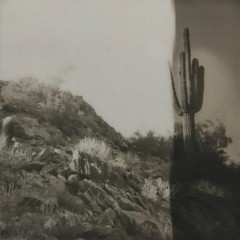 Saguaro on the hill