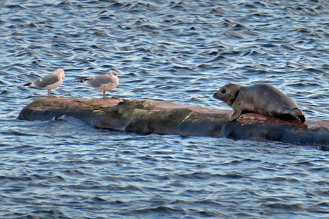 Baby seal and friends!