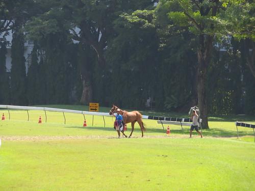 ロイヤルバンコクスポーツクラブのコースに入ってくる馬