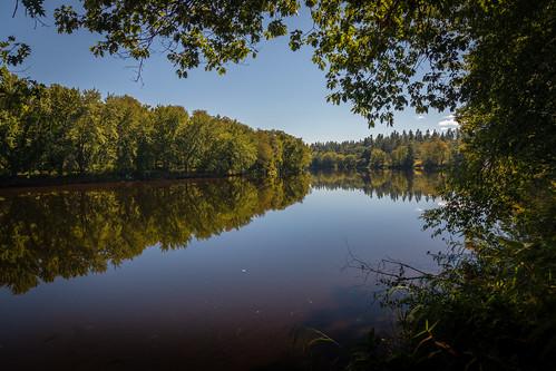 sundayriver androscogginriver maine rio bank riverbank reflections sunny pleasant branches canoneos5dmarkiv ef24105mmf4lisusm