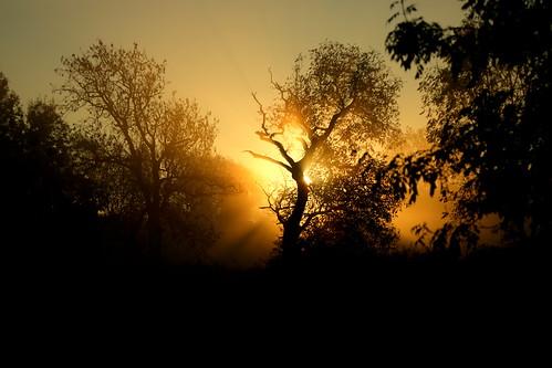 sunrise sunbeams mist fog