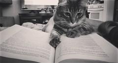 studious.