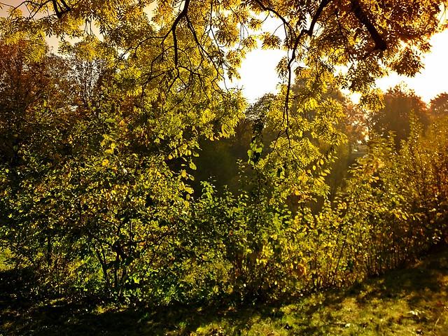 im Herbstlich - in the autumn light