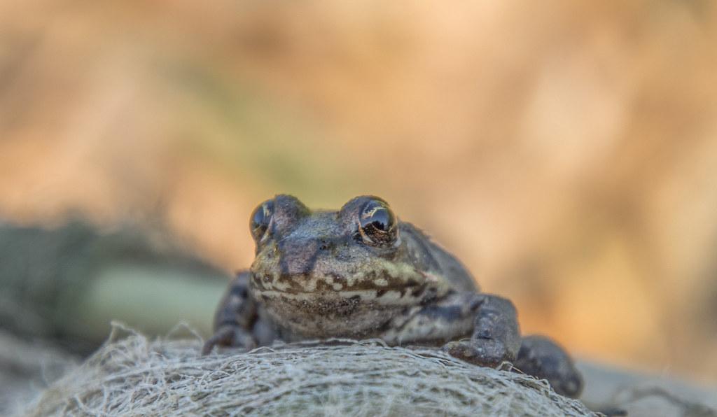 🐸 Frog 🐸