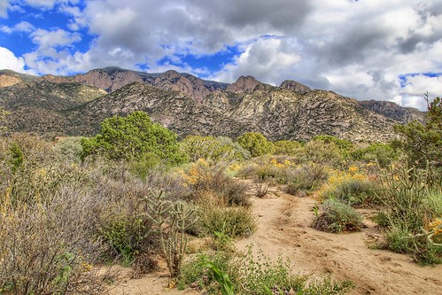 terrain clouds sky brush hiking trail newmexico albuquerque mountains sandia