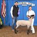 Market Lambs 2018-Jane Lounsbury