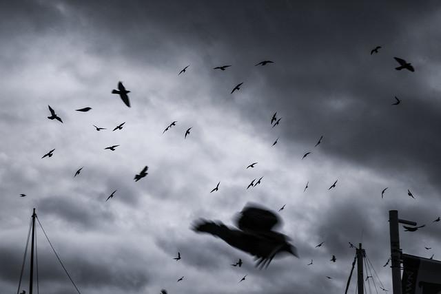 Harbor Birds 2