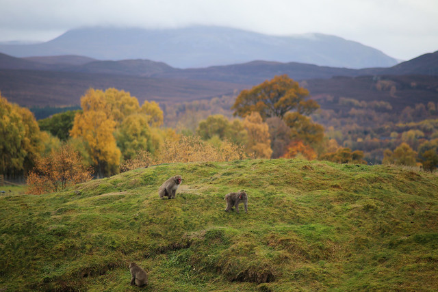 The Cairngorms National Park viewed from Highland Wildlife Park