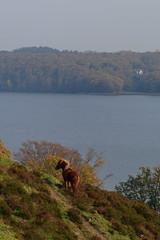 Horse on the hillside