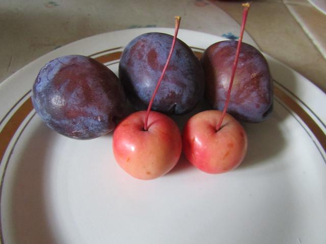 These are apples, and they are smaller than plums.